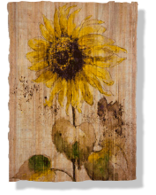 """Girasol"", 2012, ink on papyrus, 40 x 61 cm"